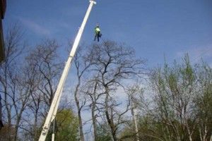 Photo #4: RELIABLE CRANE LTD. (VERY EXPERIENCED AT TREE WORK!)