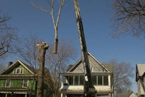 Photo #1: RELIABLE CRANE LTD. (VERY EXPERIENCED AT TREE WORK!)