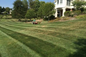Photo #20: Omar's Worldscapes Landscaping and Tree Services
