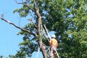 Photo #3: Ron's Professional tree care (safe trees have been injure)