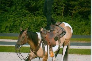 Photo #1: Professional Horse Training - $850/mo. & riding lessons are included.