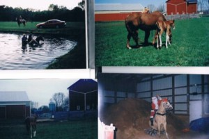 Photo #1: Crystal Springs Stables. Horse Boarding/ Large indoor Arena - $250.00/month