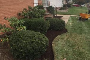 Photo #2: Shima's Landscaping services. Experienced and Insured
