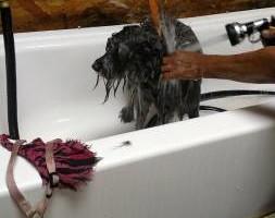 Photo #3: Professional Groomer Sabrina at Dog Day Afternoon