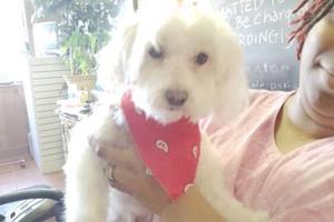 Photo #5: Professional Groomer Sabrina at Dog Day Afternoon