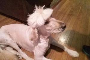 Photo #6: Professional Groomer Sabrina at Dog Day Afternoon