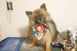 Photo #8: Professional Groomer Sabrina at Dog Day Afternoon
