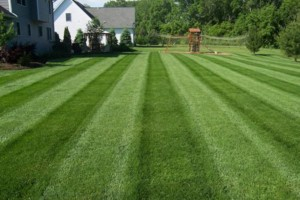 Photo #1: Spring clean up! Edging trimming, grass cutting by All weather landscape