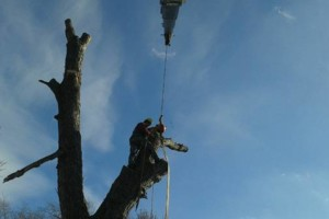 Photo #3: BEST AFFORDABLE TREE SERVICE by DAVE!