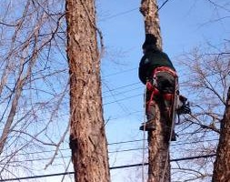 Photo #2: BEST AFFORDABLE TREE SERVICE by DAVE!