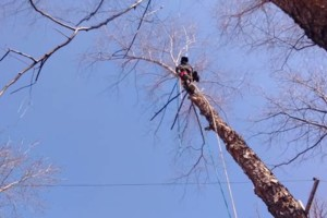 Photo #1: BEST AFFORDABLE TREE SERVICE by DAVE!