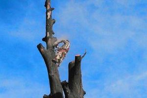 Photo #3: Alloway Tree Service - TREE TRIMMING/ STUMPS