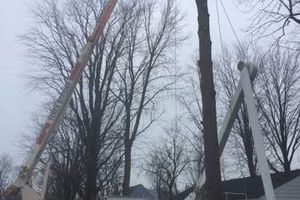 Photo #2: Alloway Tree Service - TREE TRIMMING/ STUMPS