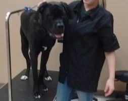 Photo #1: Certified Animal Groomer Jaime