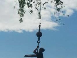 Photo #9: Thompson Tree Service