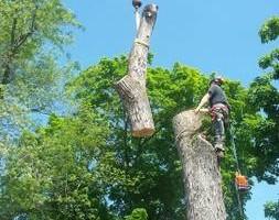 Photo #8: Thompson Tree Service