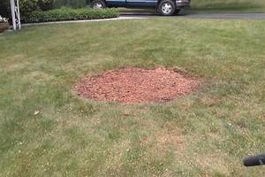 Photo #6: Thompson Tree Service