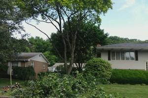 Photo #5: Thompson Tree Service