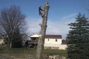 Photo #4: Thompson Tree Service