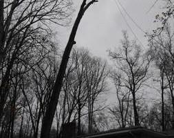Photo #3: Thompson Tree Service