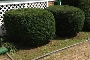 Photo #1: Thompson Tree Service