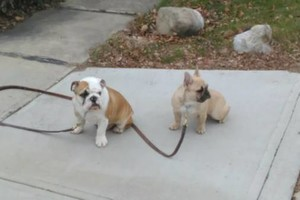 Photo #7: Alpha and Omega - PROFESSIONAL DOG TRAINING