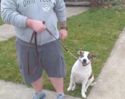 Photo #2: Alpha and Omega - PROFESSIONAL DOG TRAINING