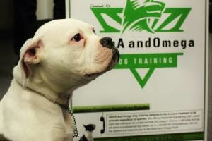 Photo #1: Alpha and Omega - PROFESSIONAL DOG TRAINING