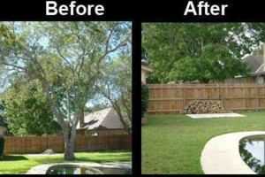 Photo #1: BIGMAN TREE TRIMMING & REMOVAL SERVICES...