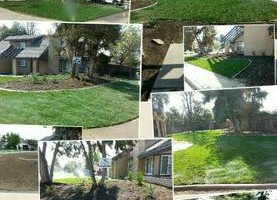 Photo #22: Torres Landscaping and Concrete (sprinklers system, sod, plants/concrete curbing, colored concrete)