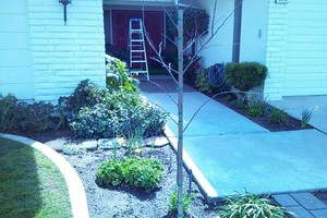 Photo #2: LAWN SERVICE FOR LESS! Beat any Price!  $35-$45