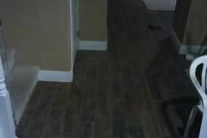 Photo #1: Joe's Handyman & Home Services! Flooring, Electrical, Pluming - DiGiacomo