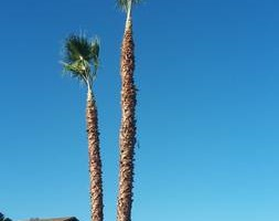 Photo #2: A.T.S - all trees service - Pruning, Topping, Pruning, Thinning...