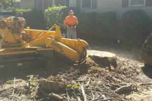 Photo #1: Stump Grinding by Bridges Tree Service!