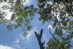 Photo #3: Genesis Construction LLC - Demos, Home Improvement & Tree Removals