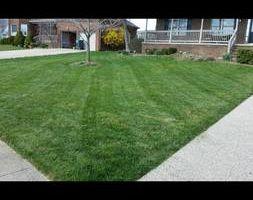 Photo #1: Lawn Mowing Richmond/Lexington area. Free low estimates!