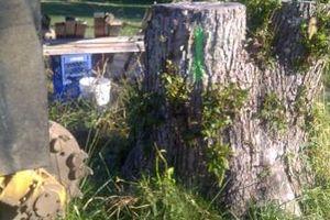 Photo #15: Reinstorf's Stump Grinding Service