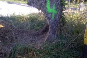 Photo #14: Reinstorf's Stump Grinding Service
