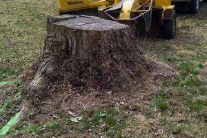 Photo #8: Reinstorf's Stump Grinding Service