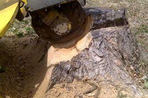 Photo #6: Reinstorf's Stump Grinding Service