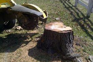 Photo #4: Reinstorf's Stump Grinding Service