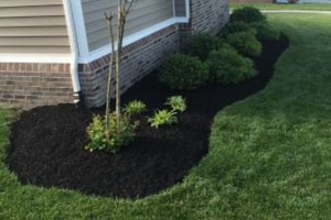 Photo #9: T&D Turf Management - INSURED - Mowing, Landscaping and MORE