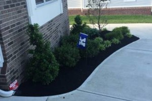 Photo #7: T&D Turf Management - INSURED - Mowing, Landscaping and MORE
