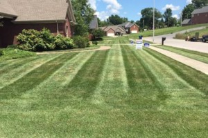 Photo #5: T&D Turf Management - INSURED - Mowing, Landscaping and MORE
