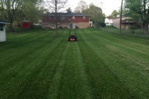 Photo #3: T&D Turf Management - INSURED - Mowing, Landscaping and MORE