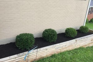 Photo #2: T&D Turf Management - INSURED - Mowing, Landscaping and MORE
