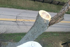 Photo #4: Madison County Absolute Tree Services