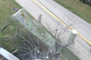 Photo #3: Madison County Absolute Tree Services