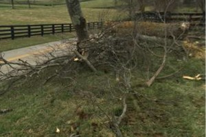 Photo #2: Madison County Absolute Tree Services