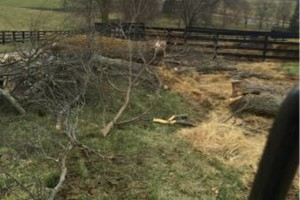 Photo #1: Madison County Absolute Tree Services